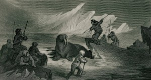 Walrus_hunting