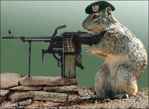 squirrelwithgun