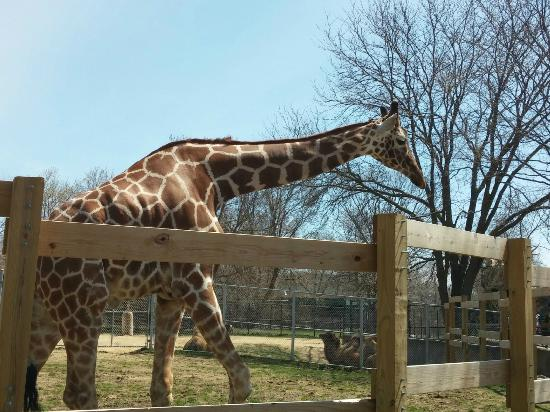 henry-vilas-zoo